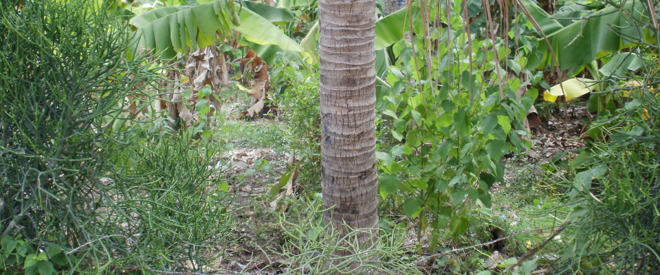 Machannkay,com Montrouis, Haiti
