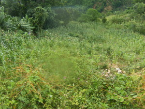 Land for sale PETION-VILLE